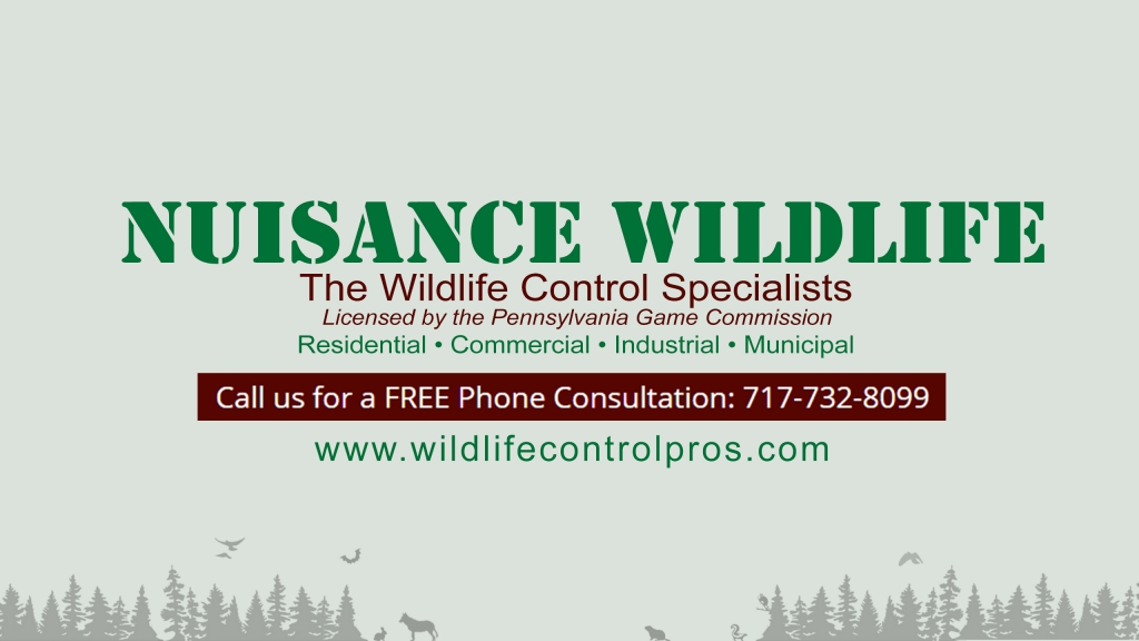 Wildlife Removal and Control in Harrisburg PA | Nuisance