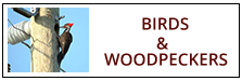 Bird and Woodpecker Removal Service Harrisburg PA