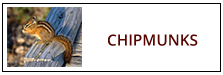 Chipmunk Removal Service Harrisburg PA