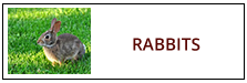 Rabbit Removal Service Harrisburg PA
