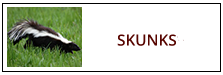 Skunk Removal Service Harrisburg PA
