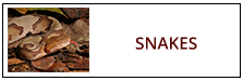 Snake Removal Service Harrisburg PA