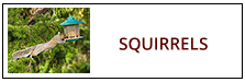 Squirrel Removal Service Harrisburg PA